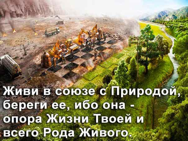 Цивилизация и Природа эволюция экологического сознания
