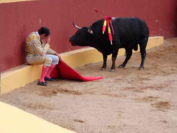 Урок человечности. Матадор и бык
