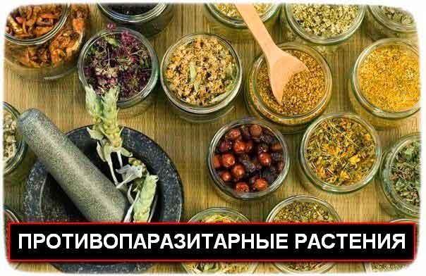 50 противопаразитарные растения